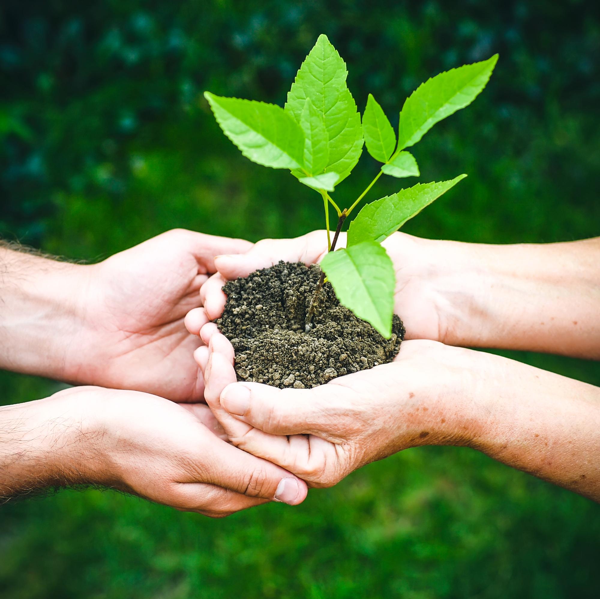 Zwei Hände übergeben knospende Pflanze an andere